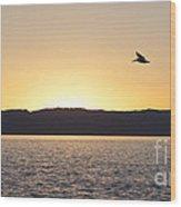 Pelican At Sunset Wood Print