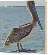 Pelican At The Gulf Wood Print