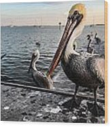 Pelican At The Pier Wood Print