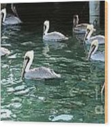 Pelican Ballet Wood Print by Claudette Bujold-Poirier