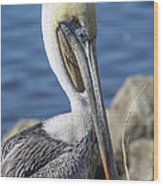 Pelican By The River Wood Print