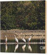 Pelican Clean Up Time Wood Print