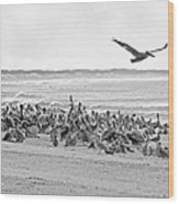 Pelican Convention  Wood Print
