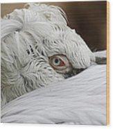 Pelican Eye Wood Print