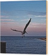 Pelican Flight Hatteras 2/11 Wood Print