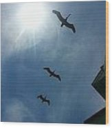 Pelican Flight Wood Print