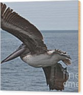 Pelican Fly By Wood Print