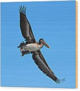 Pelican Flying High Wood Print