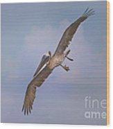 Pelican Grace In Flight Wood Print