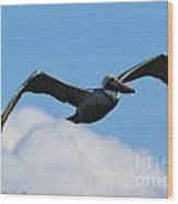Pelican In Flight I Wood Print