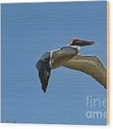 Pelican In Flight II Wood Print