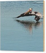 Pelican In Motion Wood Print