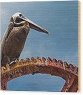 Pelican In St. Croix Wood Print