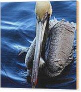 Pelican In The Bay Wood Print