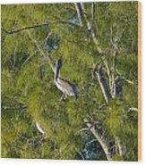 Pelican In The Trees Wood Print