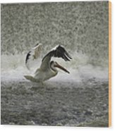 Pelican Landing In Color Wood Print by Thomas Young