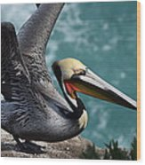Pelican Lift Off Wood Print