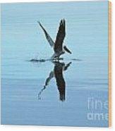 Pelican Lift Off Wood Print