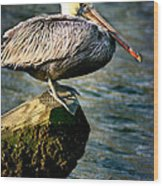 Pelican On A Pole Wood Print