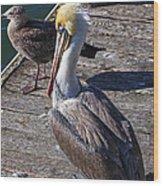 Pelican On Dock Wood Print