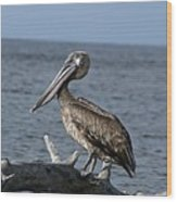 Pelican On Driftwood Wood Print