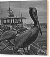Pelican On Pier Wood Print
