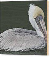 Pelican On The Intercostal Wood Print
