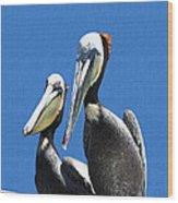 Pelican Pair At Oceanside Pier Wood Print