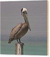 Pelican Perched On A Piling Wood Print