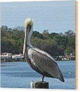 Pelican Point Wood Print