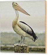 Pelican Poise Wood Print