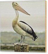 Pelican Poise Wood Print