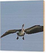 Pelican Prepare For Landing Wood Print