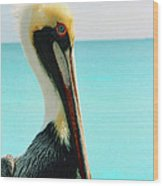 Pelican Profile And Water Wood Print