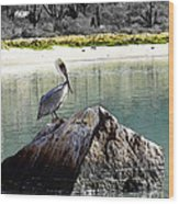 Pelican Rock Wood Print