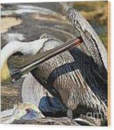 Pelican Scratch Wood Print by Adam Jewell
