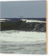Pelican Sighting  Wood Print
