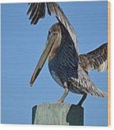 Pelican Stretch Wood Print
