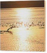 Pelican Sunset Wood Print
