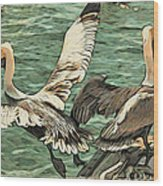 Pelican Take Off Two Wood Print