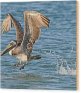 Pelican Taking Off Wood Print