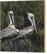 Pelican Threesome Wood Print