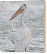 Pelican Watch Wood Print