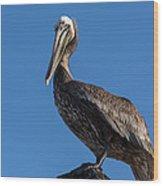 Pelican Watch Wood Print