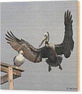 Pelican Wins Sea Gull Looses Wood Print