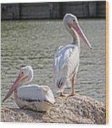 Pelicans By The Pair Wood Print