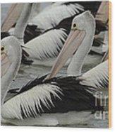 Pelicans Galore Wood Print