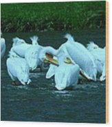 Pelicans Hanging Out Wood Print