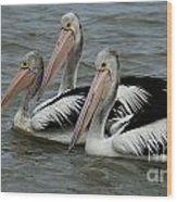 Pelicans In Australia 3 Wood Print