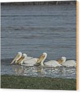 Pelicans In Floodwaters Wood Print